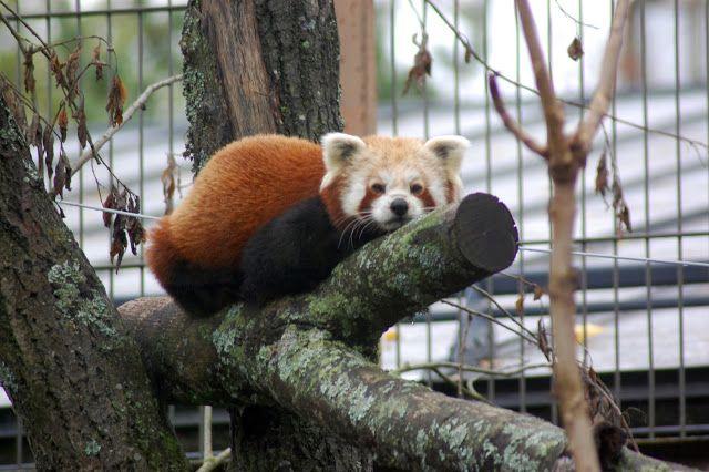 Jemina Staalon multimediavakka: Hiipivä tiikeri, nuokkuva panda ja tosi märkä lumileopardi