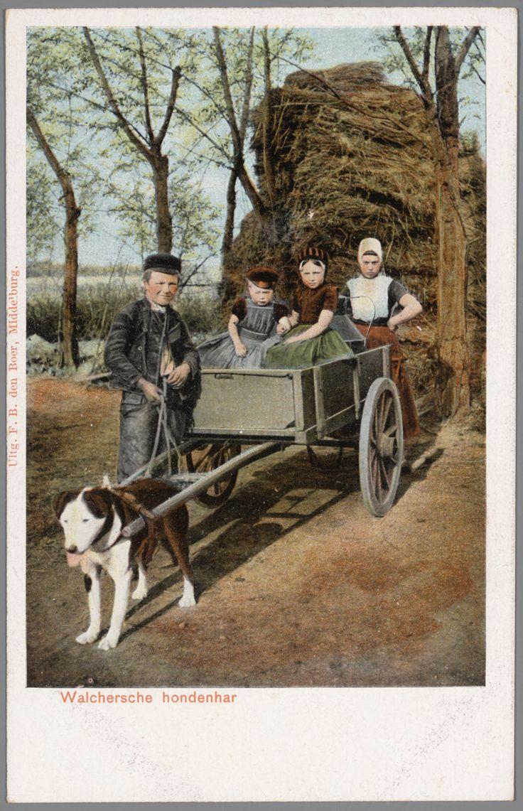Twee jongens en twee meisjes in Walcherse streekdracht bij hondenkar. Het jongetje links in de kar draagt nog een jurkje, maar wel reeds een pet. 1868-1905