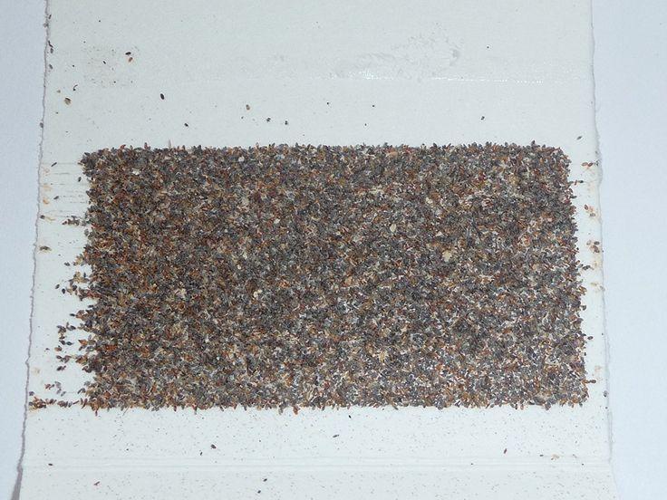 1000+ ideas about schlupfwespen on pinterest | käfer, insekten and