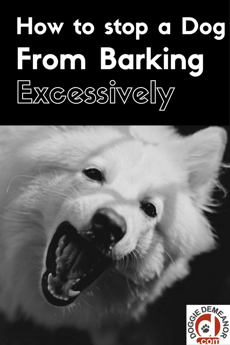 best 25 stop dog from barking ideas on pinterest dog barking at nothing dog stress and dog care