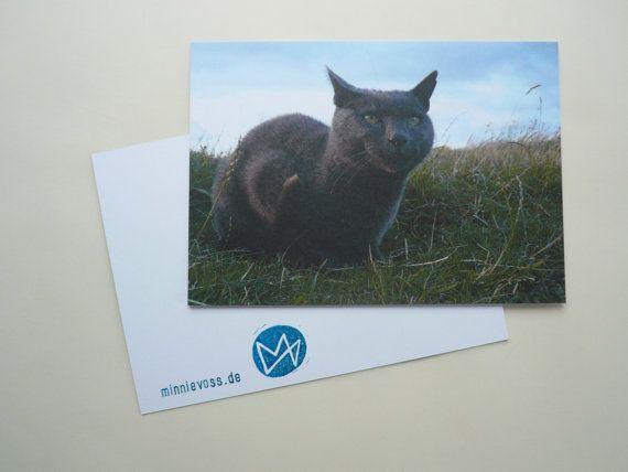 grauer Kater, acht Fotopostkarten, Postkartenset, minnievoss, analoge Fotografie, Offsetdruck, Postkarte, postcard, Katze, cat, tom, Natur by minnievoss. Explore more products on http://minnievoss.etsy.com