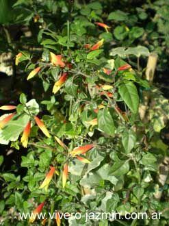46 mejores im genes sobre plantas en pinterest navidad - Plantas perennes exterior ...