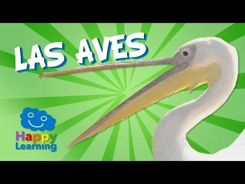 Las Aves | Videos Educativos para Niños - YouTube