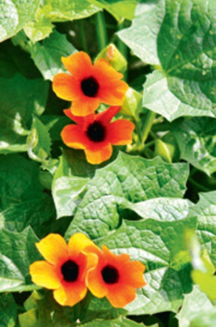 10 plantes pour les cours mi-ombragées - Coup de Pouce#.VWIBwmADRtk.facebook#.VWIBwmADRtk.facebook#.VWIBwmADRtk.facebook#.VWIBwmADRtk.facebook#.VWIBwmADRtk.facebook