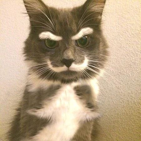 """Cat"" https://sumally.com/p/1302142"