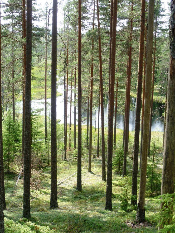 Dalarna Forest