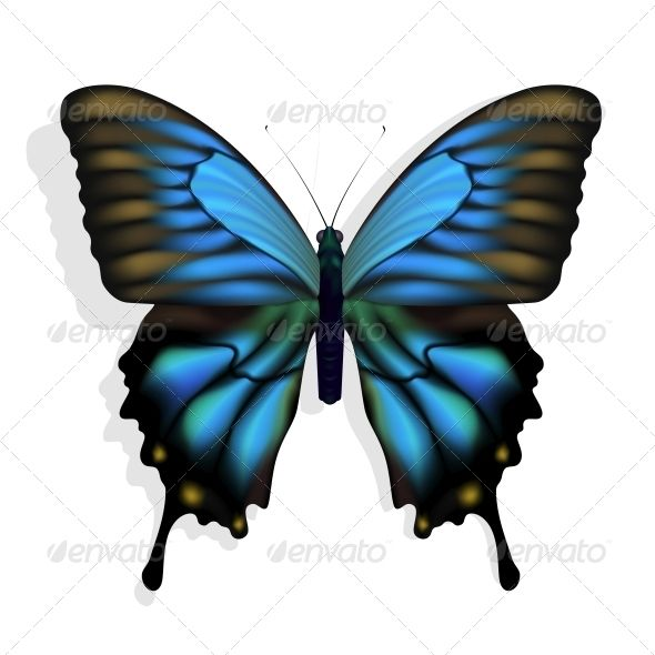 Blue Butterfly  #GraphicRiver         Excellent vector blue butterfly isolated on white background     Created: 10February12 GraphicsFilesIncluded: JPGImage #VectorEPS Layered: No MinimumAdobeCSVersion: CS Tags: animal #antenna #background #beautiful #beauty #biology #blue #bright #bug #butterfly #color #colorful #descriptive #environment #fly #fragile #insect #isolated #monarch #moth #nature #pretty #single #spring #summer #tropical #vibrant #white #wildlife #wing