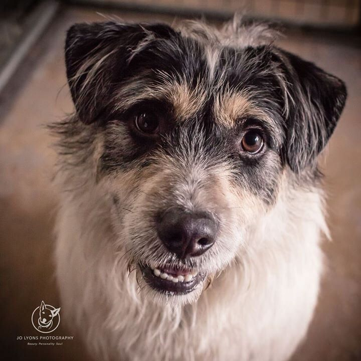 Little Alfie... isn't he the sweetest boy? I met Alfie last Friday and he was looking very lost... well he was in a pound so why wouldn't he? He kept looking out to the carpark for his people, but they haven't come. What is it with all these gorgeous dogs