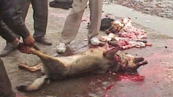 Chinese Dog Meat Why Is It Not Stopped