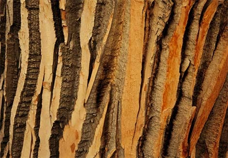 Cottonwood tree bark.: Natural Patterns, Cottonwood Trees, Trees Patterns, Trees Trunks, Trees Bark, National Geographic, Texture, Front Yard, Patterns In Natural