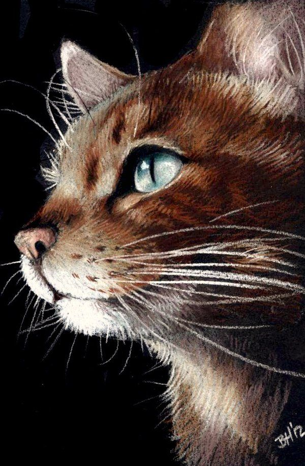 Ginger Tom by OFools