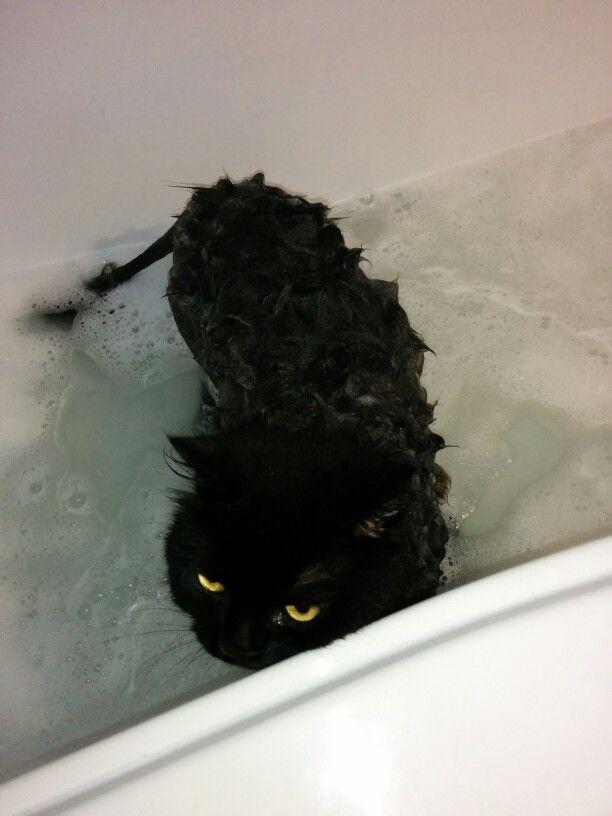 My cat washing :)