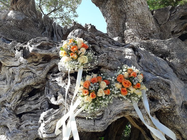 bouquets on ancient olive tree