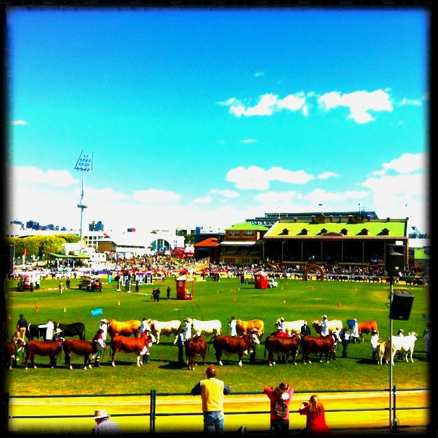 EKKA Grand Parade!! Can't wait for it.