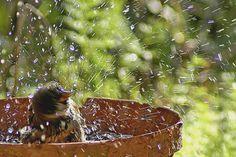 Les oiseaux se font rares dans votre jardin ? Vous aimeriez les voir plus nombreux ? Quelques gestes simples à accomplir pour les attirer dans un lieu agréable.