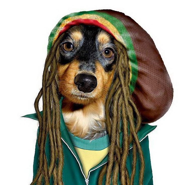 Famous Figures In Animal Disguises: Dogs Marley, Funny Pictures, Bobs Marley, Dogs Show, Famous Faces, Pet Rocks, Pet Costumes, Wiener Dogs, Dogs Funny