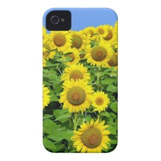 Sunflower Fields iPhone Covers and Cases