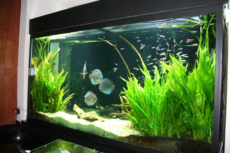 Freshwater planted fish tanks google search fresh for Tall fish tank decorations
