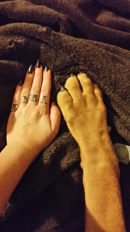 Boerboel paw vs hand.