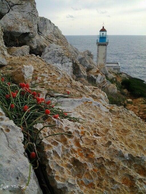 Ephedra foemina fruits: cape Tenaro,  Mani Greece