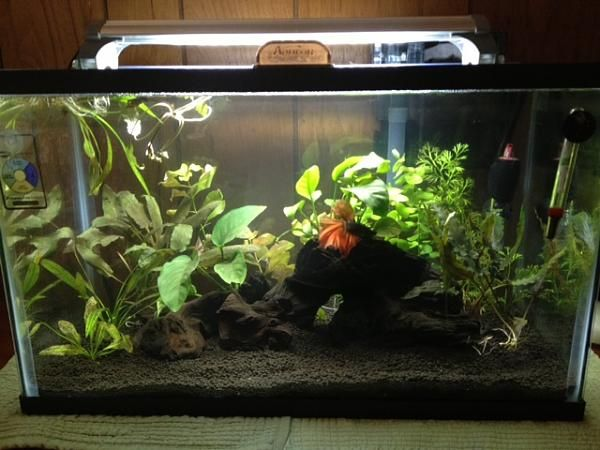 Cool 20 gallon fish tank ideas 20 gallon planted tank for Fish for a 10 gallon tank