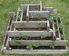 Grow almost 50 strawberry plants in less than a square yard of space - Click image to find more Gardening Pinterest pins