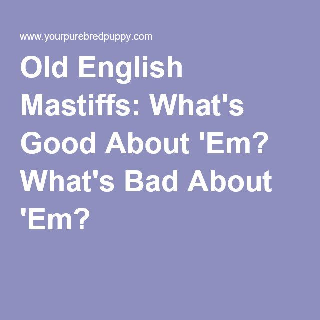 Old English Mastiffs: What's Good About 'Em? What's Bad About 'Em?