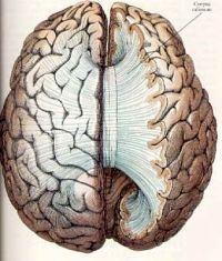 Dr. Strangeloves affliction: The Alien-hand syndrome