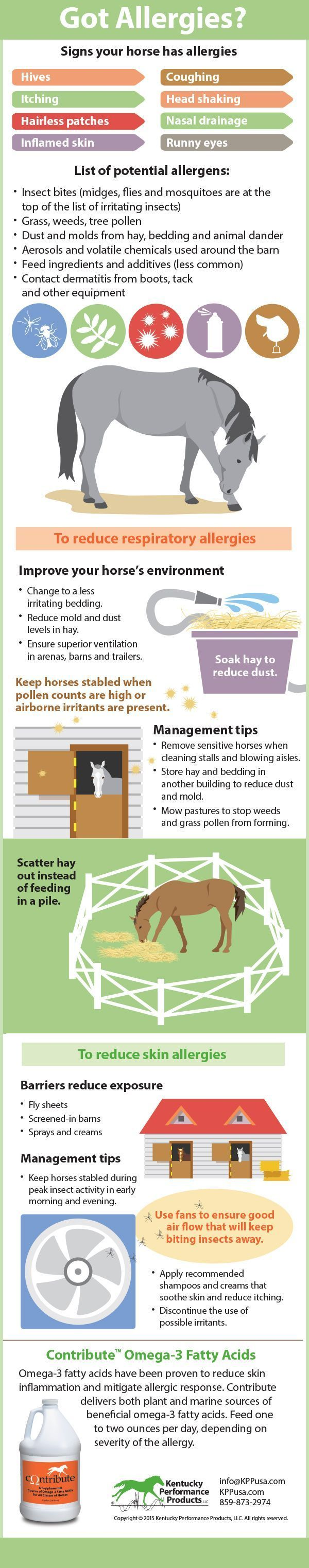 Does your horse have allergies? Here's an infographic with tips on how to reduce them.  #horsehealth