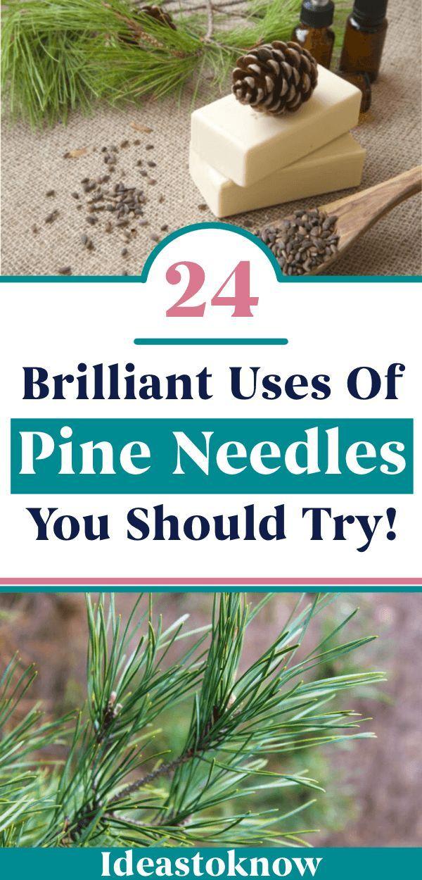 3d35614ba0597083bd8a98c32bf3eaad - Are Pine Needles Good For Gardens