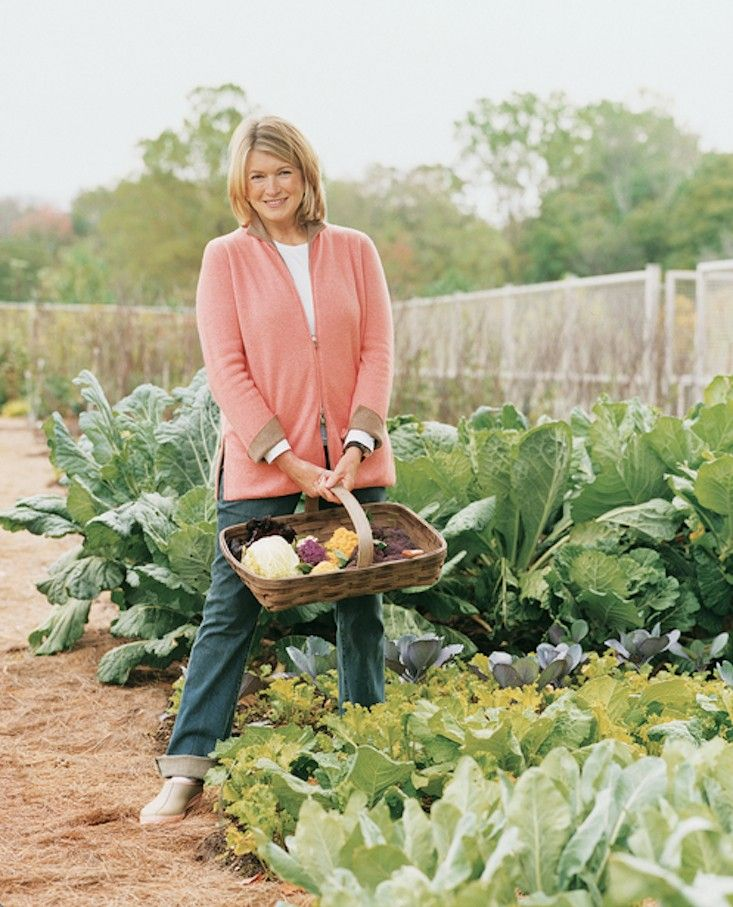 Creating Our First Vegetable Garden Advice Please: 11 Garden Ideas To Steal From Martha Stewart By Michelle