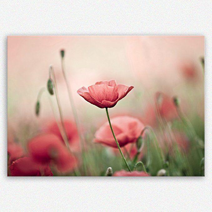 Ge Bildet Sensationspreis Hochwertiges Leinwandbild Bilder Blumen Bilder Pflanzen Garten Bilder Ideen Natu Leinwandbilder Blumen Bilder Bilder