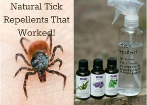 TICKs (kliešť) prevention - safe essential oils which works: Lemongrass, Eucalyptus, Levander, Peppermint