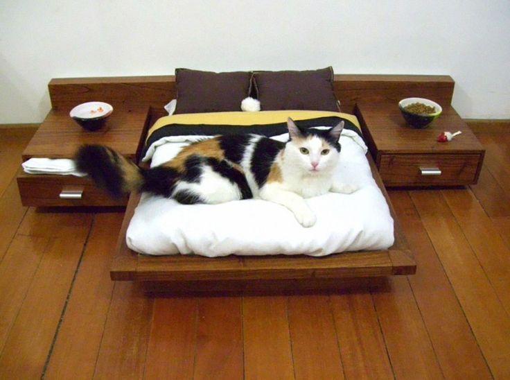 No puedes perderte estos 25 muebles diseñados para gatitos