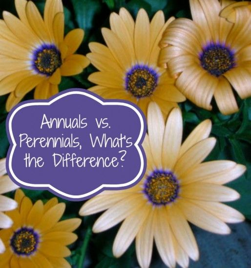 Annuals vs. Perennials, What's the Difference? - Natural Living Mamma