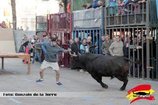 torodigital: Terminan los festejos taurinos en la población al...