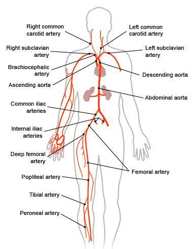 152 best EAS Medical Coding images on Pinterest Icd 10, Medical - medical coding job description