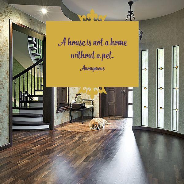 Pet Quote