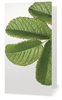 Rose leaf. Cards for florists. Gift card for flower arrangements. Scandinavian design. Jäderberg & Co.