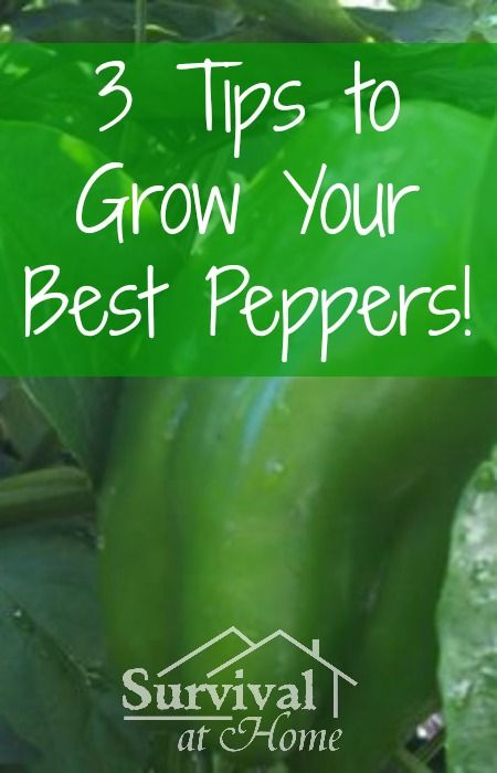 3 Tips to Grow Your Best Peppers! (via Survival at Home)