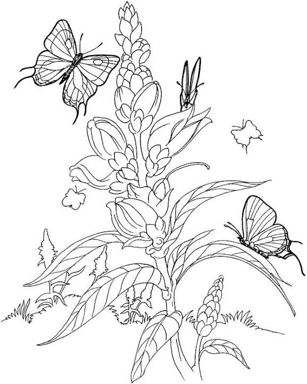 124 best Birds, Insects etc Coloring Pages 2 images on Pinterest - copy coloring pages flowers and butterflies