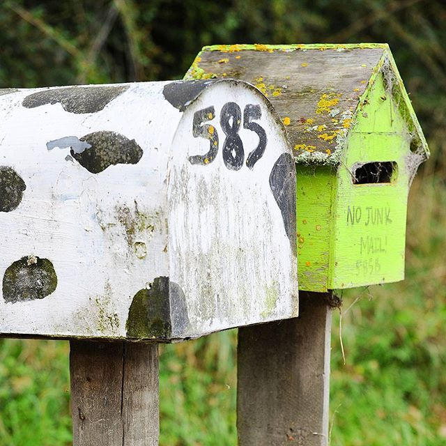 Traditional mailboxes in New Zealand's North Island. Made me smile ! #newzealand #cute #smile #mail #green #travel #traveling #vacation #instatravel #instago #instagood #trip #holiday #photooftheday #fun #travelling #tourism #tourist #instadaily #travelblogger #instatraveling #mytravelgram #travelgram #travelingram #igtravel #countryside #rural #nojunk #instadaily #picoftheday