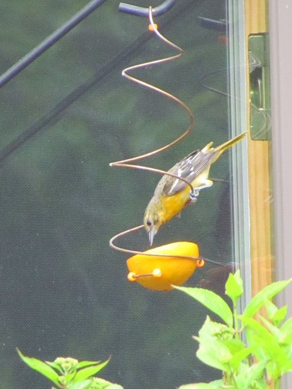 55 Best Oriole And Hummingbird Diy Feeders Images On