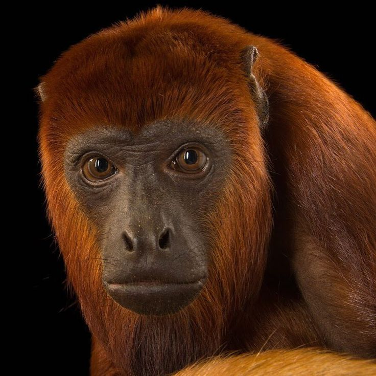"National Geographic (@natgeo) on Instagram: ""Image by @joelsartore 