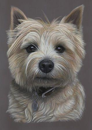 Delightful Dave - Cairn Terrier Portrait www.bydonna.co.uk www.facebook.com/bydonna.co.uk