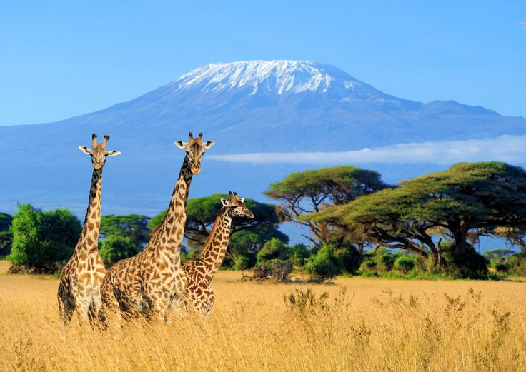 Which African country do you secretly want to explore?