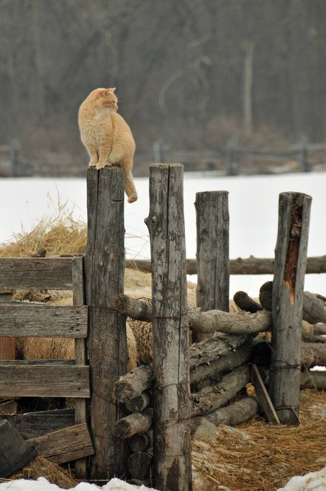 Cat On a Cold Wood Post
