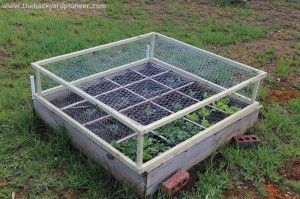 How to KEEP CRITTERS OUT of your Raised Beds ~ My Aunt has the neatest way to keep critters out of your raised beds. She made this simple lift off frame with 1×1 and chicken wire. They let her easily access her 'Square Foot Garden' but keep all the critters out of her veggies!  GREAT idea!