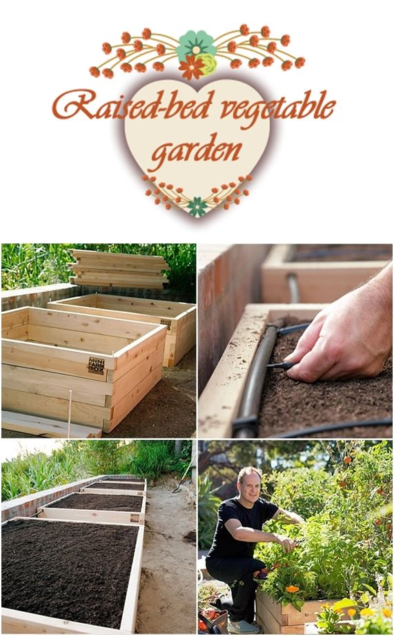 How to: Step 1: Set up raised-bed boxes. We choose five cedar boxes called miniframbox you can get them from Amazon. Step 2: Fill the boxes with compost. Step 3: put in drip irrigation. With a drip...