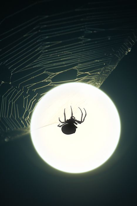 Ever watched a spider build it's web in the pale moonlight?